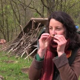 wildkräuter-intuitiv-erfahren